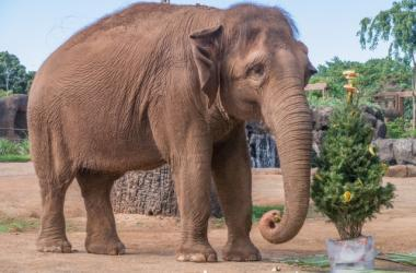 Celebrate the holidays early at the Honolulu Zoo Society's annual Christmas with the Animals!