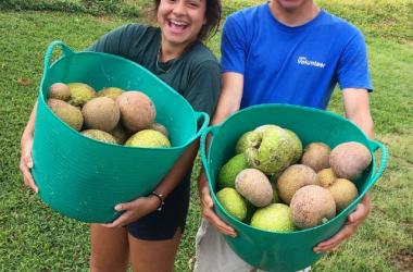 Volunteers after a breadfruit harvest