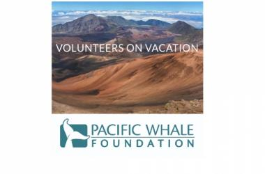 Volunteer at Waihee Refuge with Pacific Whale Foundation
