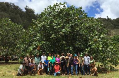 Agroforestry Team Work Day