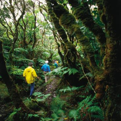 A guided tour through a tropical forest on the east end of Molokai