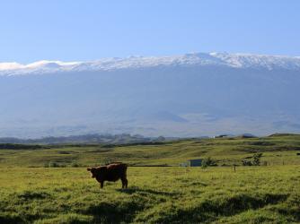 Ranch & maunakea