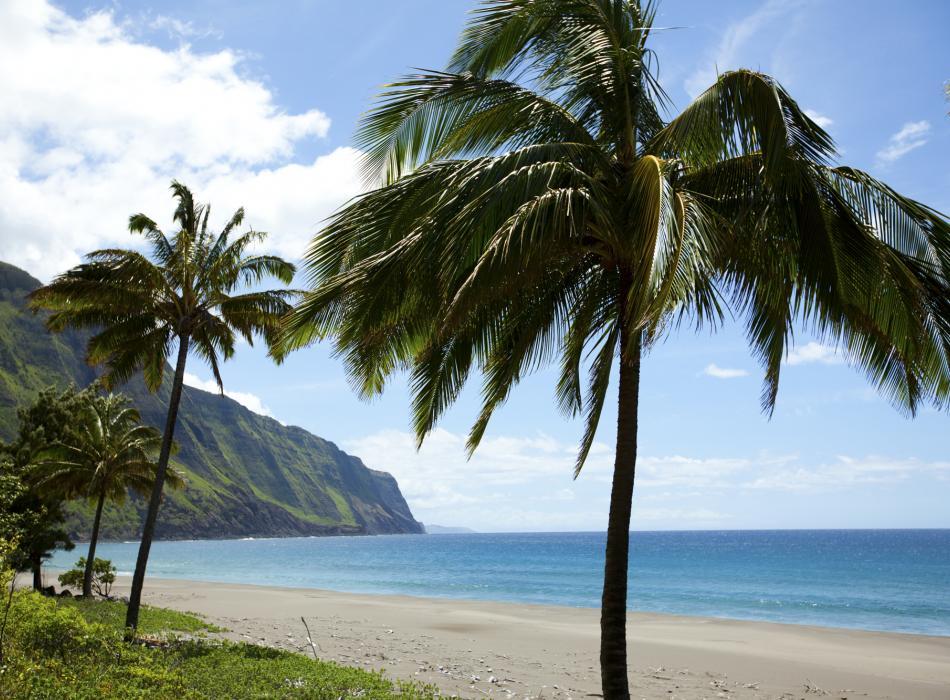 An empty beach with palm trees on the Hawaiian island of Molokai