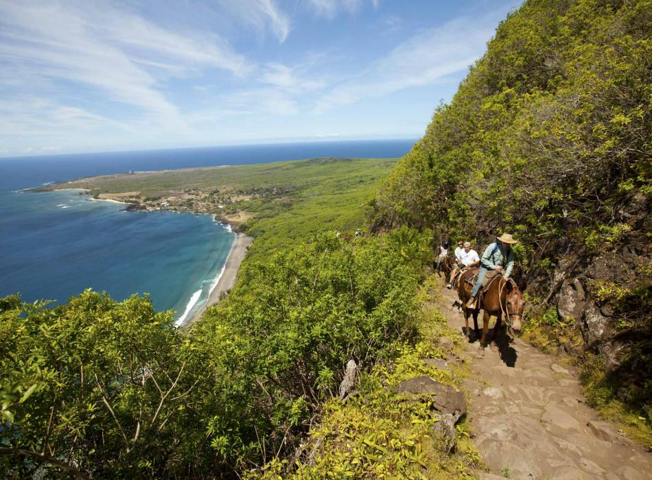 A guided horseback ride up the sea cliffs of Molokai