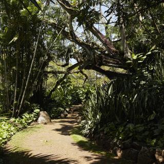 Allerton & McBryde Gardens